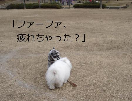 011繝悶Ο繧ー_convert_20110203002150