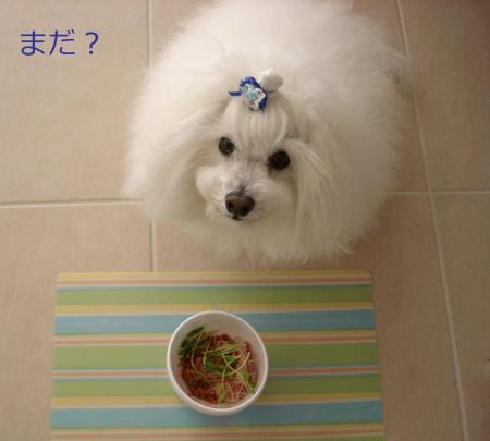 030繝悶Ο繧ー_convert_20110203002402