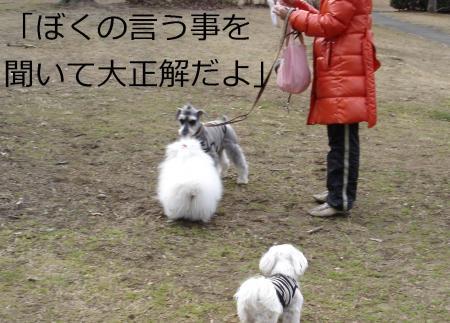 017繝悶Ο繧ー_convert_20110203002303