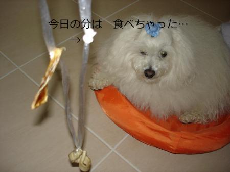 192繝悶Ο繧ー_convert_20110208234104