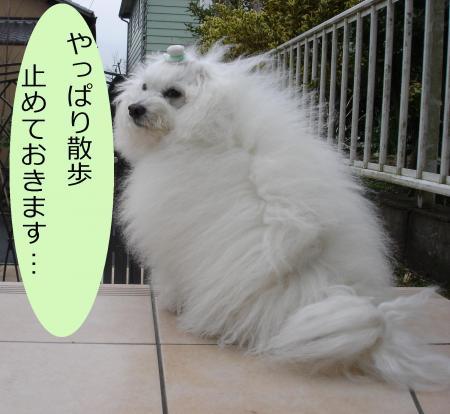 034繝悶Ο繧ー_convert_20110302220643