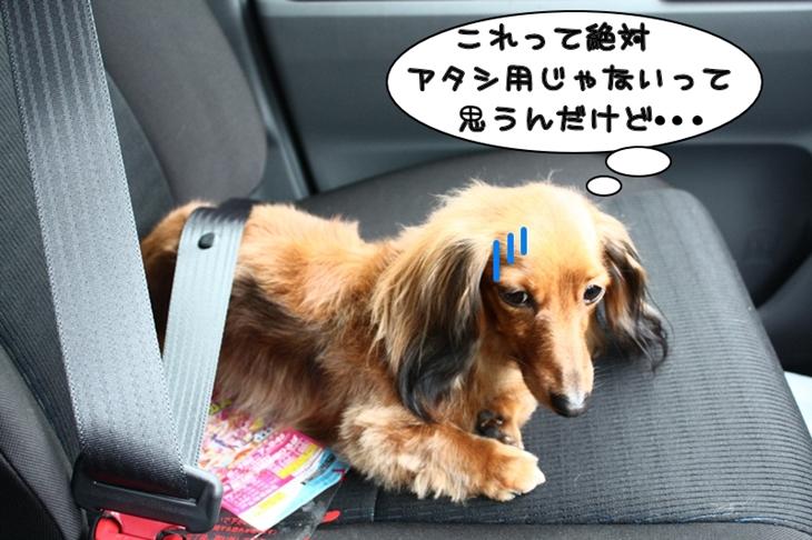 ワンコにもシートベルト?