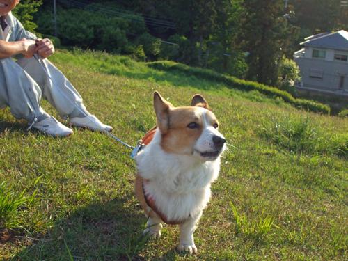 ヨーデル犬見習い