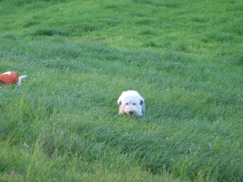 草丈が伸びた!