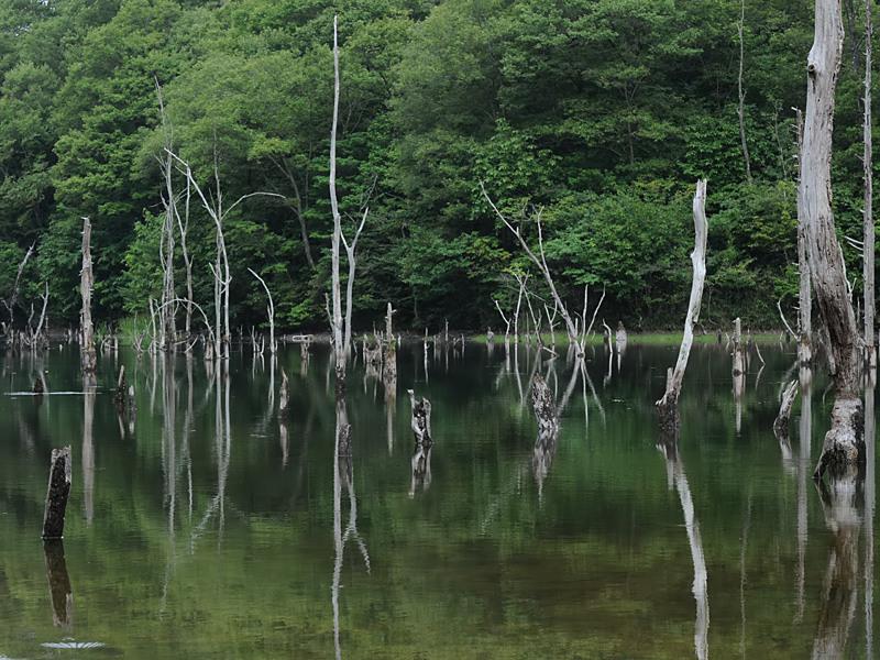 海上の森大正池