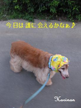 ブログ 8.12 ① IMG_3334