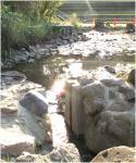 水が抜けた池B