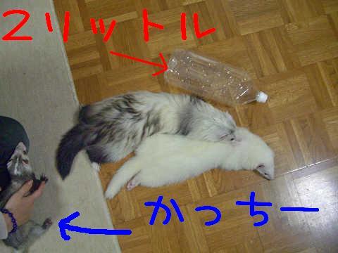 CIMG0209_edited-1.jpg