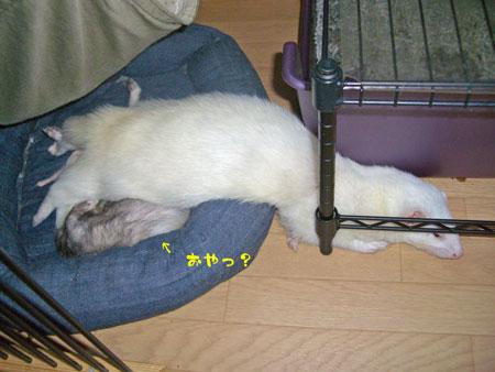 CIMG2003.jpg