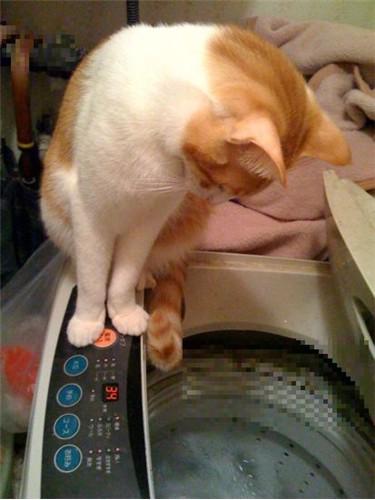 洗濯機と那希