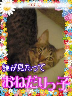 tukusi_20081228190312.jpg