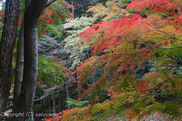 千ヶ峰紅葉2006-4