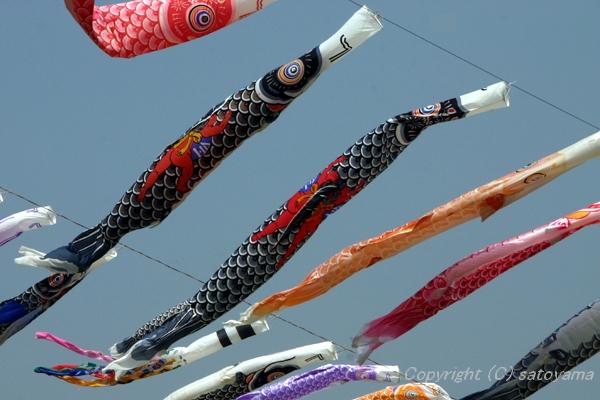 鯉のぼり2007