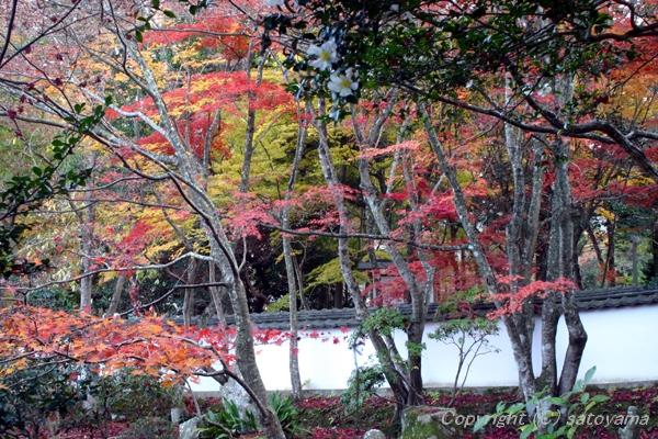 西林寺の紅葉2007