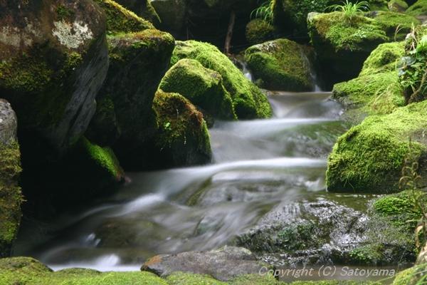 苔と渓流2008-2