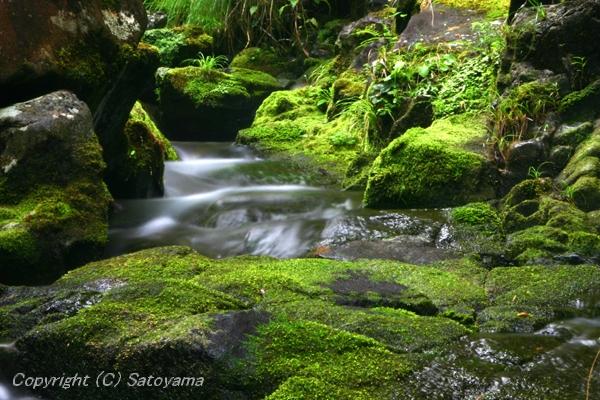 苔と渓流2008-3