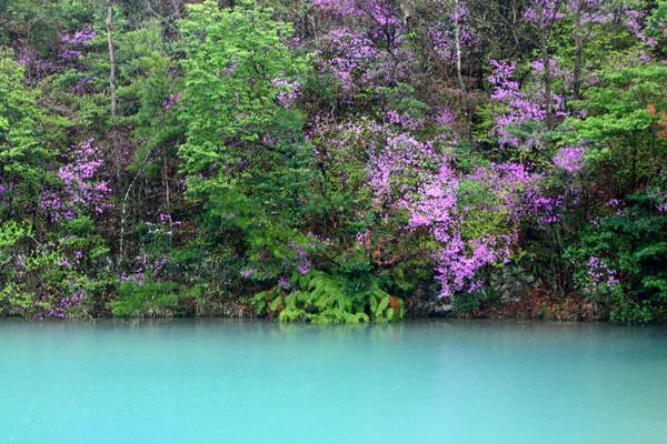 池とツツジ