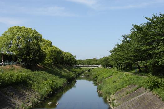 典型的な都市河川ですが、並木 ...