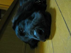 20091028_72.jpg