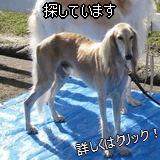 あんちゃん