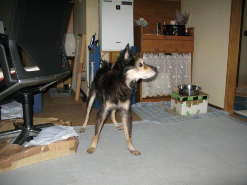 chena 20111029-16