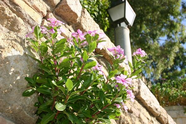 コルドバ アルカサル内の花