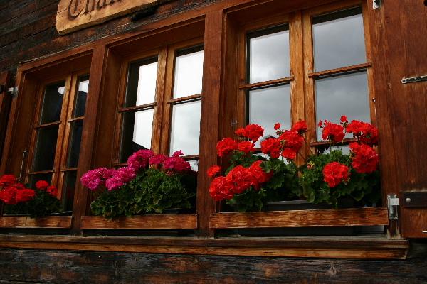 スイス窓に飾ってある花