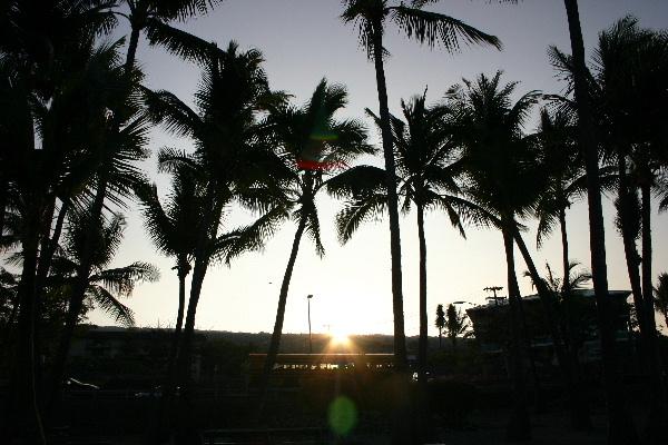 ハワイの朝焼けとやしの木