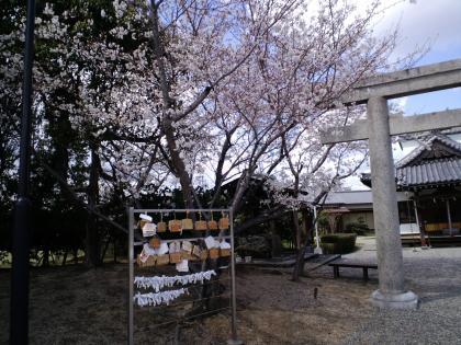 GokokuJinja20100330 (18)