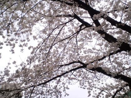佐古諏訪神社へ散歩 (7)