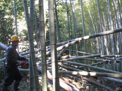 竹林整備3