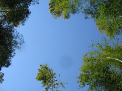 竹林整備7