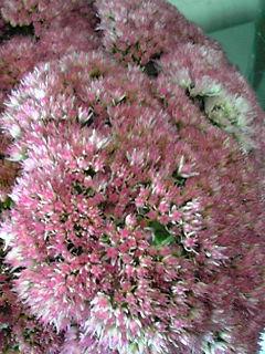 花を習うならフラワーアートクリエイター協会 狭山・鶴ヶ島・銀座・恵比寿・若葉