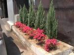 花壇植栽2