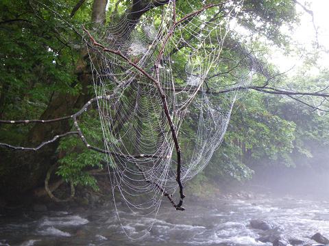 090802蜘蛛の巣