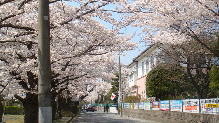 磐城桜が丘入学式20110415-01