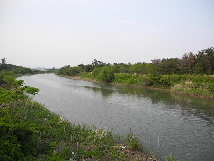 防潮保安林-横川