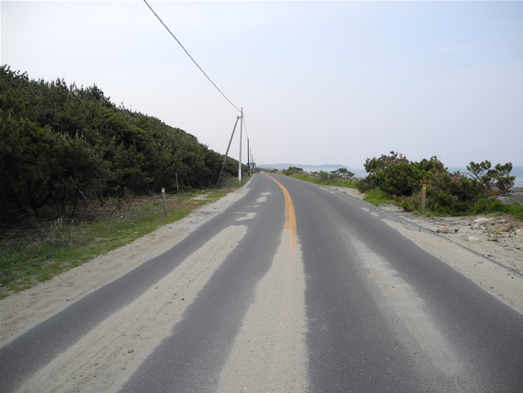 防潮保安林-県道