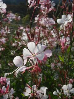 20111010蒜山ハービル013