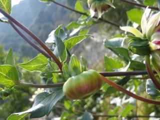 20111010蒜山ハービル006