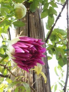 20111010蒜山ハービル005