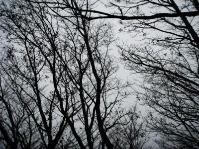 20111201根子岳07