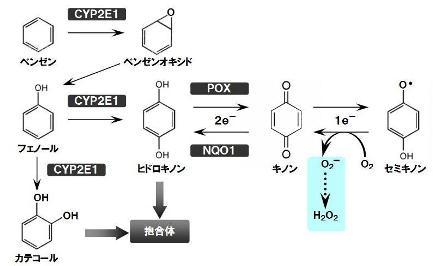 benzene-3