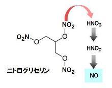 peroxynitrite-2