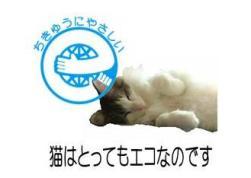 eco-cat