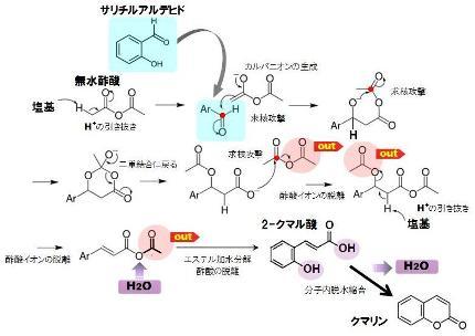 organic-6