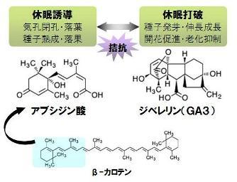 hydrogen peroxide-2
