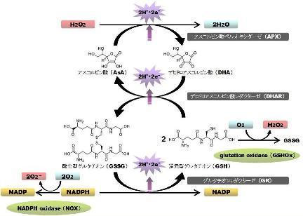 hydrogen peroxide-4