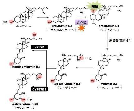 hydrogen peroxidase-1