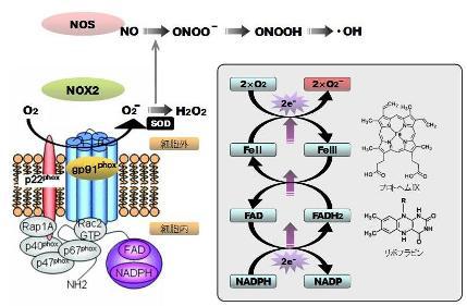 hydrogen peroxide-5